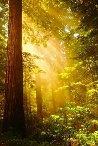 Fototapety NATURA drzewa 6610-big