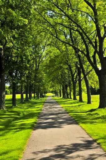 Fototapety NATURA drzewa 6628-big