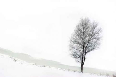 Fototapety NATURA drzewa 6629-big