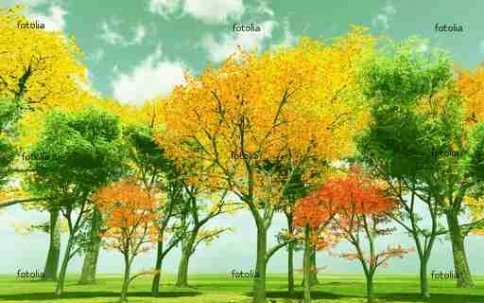 Fototapety NATURA drzewa 6639-big