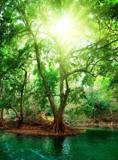 Fototapety NATURA drzewa 6641-big