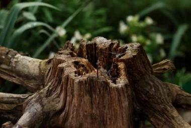 Fototapety NATURA drzewa 6655