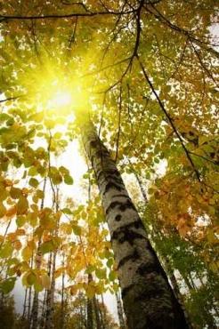 Fototapety NATURA drzewa 6658