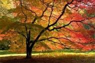 Fototapety NATURA drzewa 6661 mini