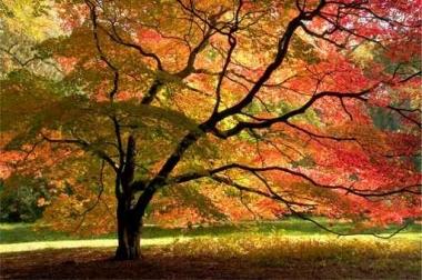 Fototapety NATURA drzewa 6661