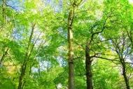 Fototapety NATURA drzewa 6663 mini