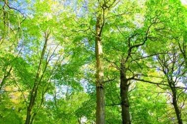 Fototapety NATURA drzewa 6663