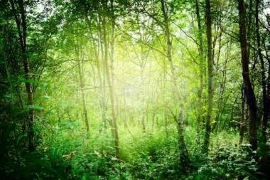 Fototapety NATURA drzewa 6665