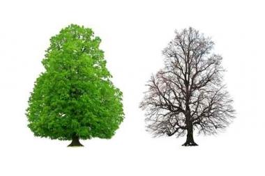 Fototapety NATURA drzewa 6667