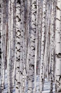 Fototapety NATURA drzewa 6668 mini