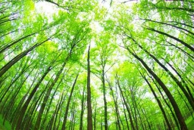 Fototapety NATURA drzewa 6670