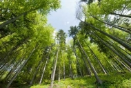 Fototapety NATURA drzewa 6672 mini