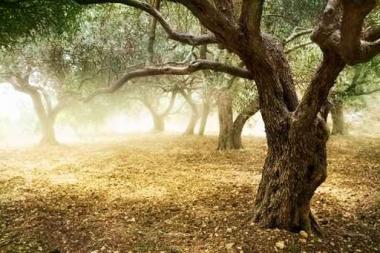 Fototapety NATURA drzewa 6673