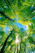 Fototapety NATURA drzewa 6674 mini