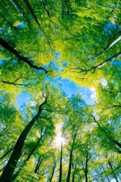 Fototapety NATURA drzewa 6674