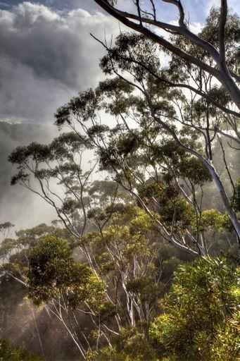 Fototapety NATURA drzewa 6675-big