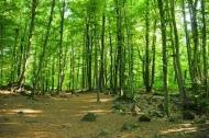 Fototapety NATURA drzewa 6677 mini