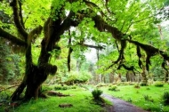 Fototapety NATURA drzewa 6678 mini