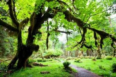 Fototapety NATURA drzewa 6678