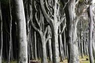 Fototapety NATURA drzewa 6681 mini