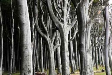 Fototapety NATURA drzewa 6681