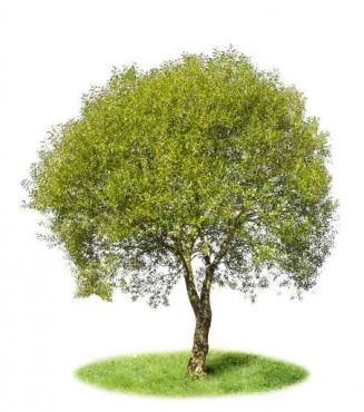 Fototapety NATURA drzewa 6684
