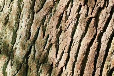 Fototapety NATURA drzewa 6685