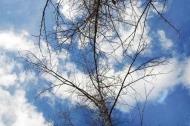Fototapety NATURA drzewa 6687 mini