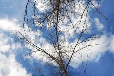Fototapety NATURA drzewa 6687