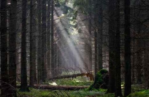 Fototapety NATURA drzewa 6689-big