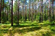 Fototapety NATURA drzewa 6691 mini