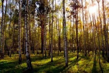 Fototapety NATURA drzewa 6692