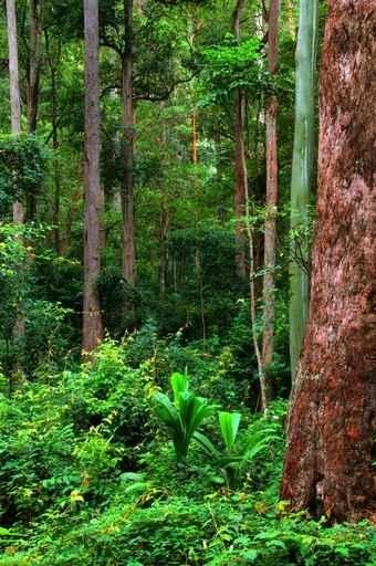 Fototapety NATURA drzewa 6693-big