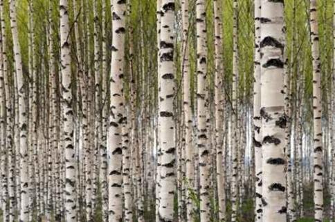 Fototapety NATURA drzewa 6696-big