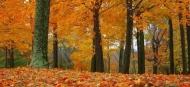 Fototapety PANORAMA fauna i flora 6855 mini
