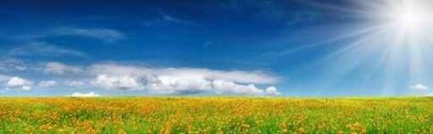 Fototapety PANORAMA fauna i flora 6872-big