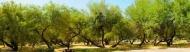 Fototapety PANORAMA fauna i flora 6884 mini