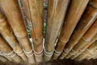 Fototapety NATURA bambusy 7136 mini