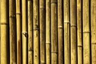 Fototapety NATURA bambusy 7137 mini