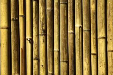 Fototapety NATURA bambusy 7137