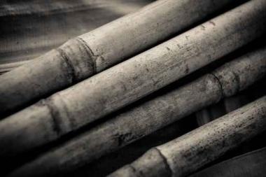 Fototapety NATURA bambusy 7138