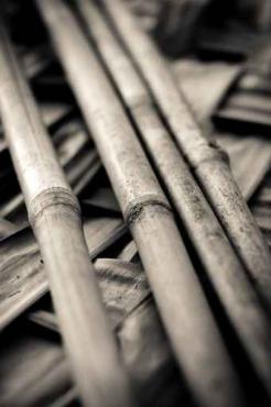 Fototapety NATURA bambusy 7139