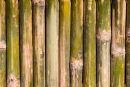 Fototapety NATURA bambusy 7140 mini