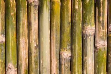 Fototapety NATURA bambusy 7140