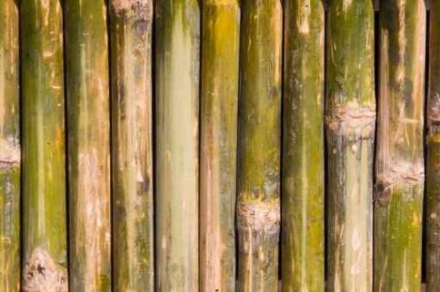 Fototapety NATURA bambusy 7140-big