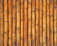 Fototapety NATURA bambusy 7141 mini