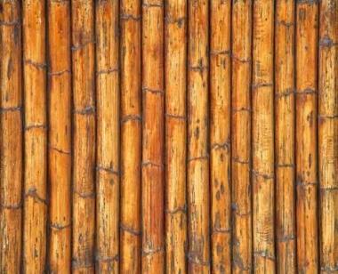 Fototapety NATURA bambusy 7141