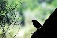 Fototapety ZWIERZĘTA ptaki 7965 mini