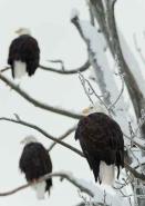 Fototapety ZWIERZĘTA ptaki 7966 mini