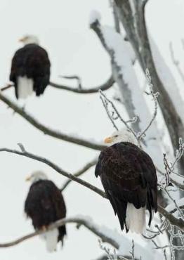 Fototapety ZWIERZĘTA ptaki 7966